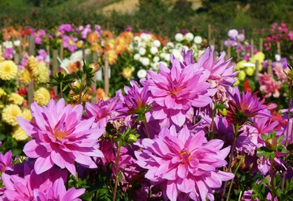 Grasshoppers Garden Center has annual flowers for Amherst, NH