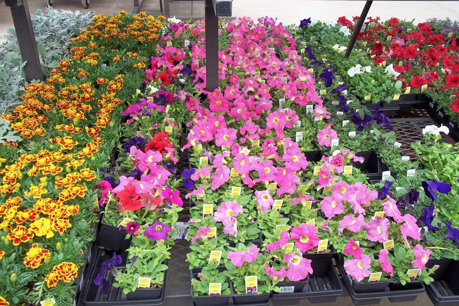 Proven Winner Annuals New Boston NH